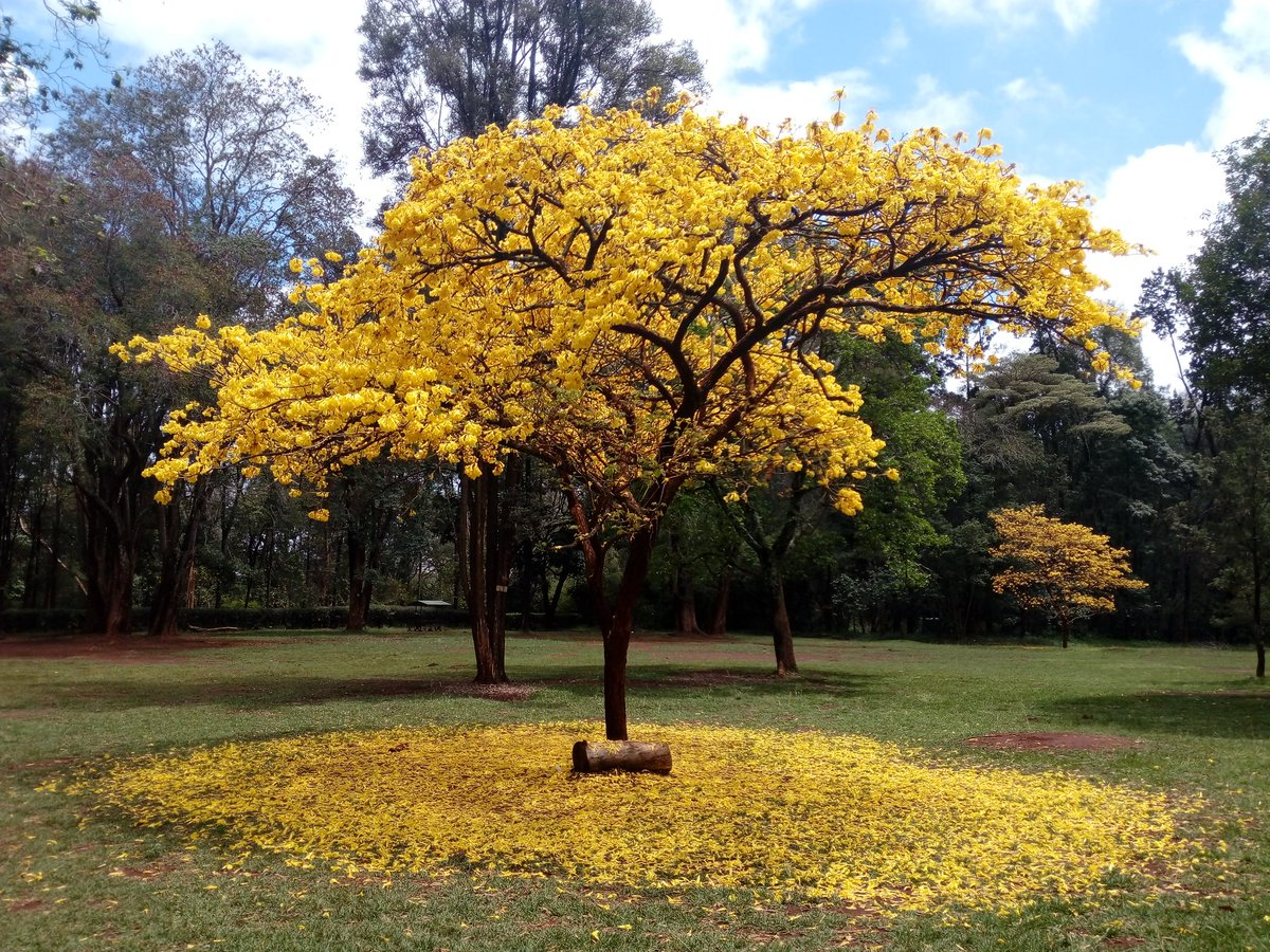 places to visit in nairobi - nairobi-arboretum